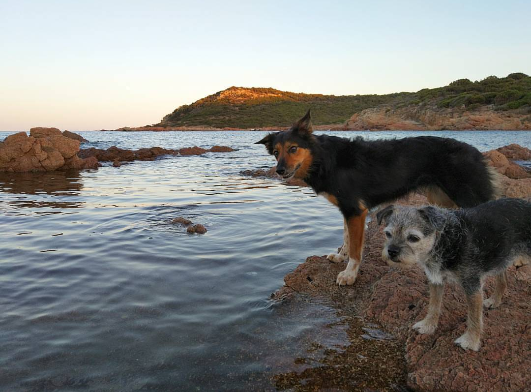 Two dogs standing by the lake - Harba Blog