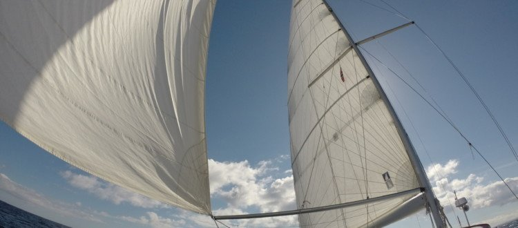 Sail-in-the-wind